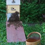 Борьба с роением пчёл
