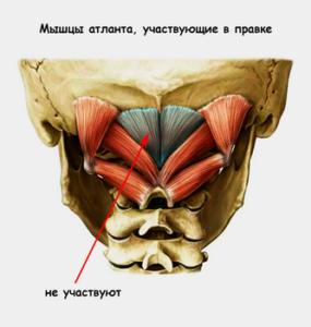 atlant_muscule
